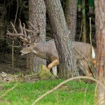 deer droppings photo