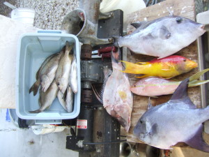 Cap'n Larry's Fish Cleaning Table  The Chesapeake Today photo by Larry Jarboe