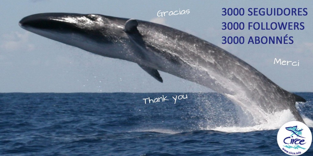 A rare event anywhere, this Fin Whale propels its 70+ ton weight fully out of the ocean and the event was caught on film.