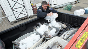 dp-pictures-3000-pounds-of-fish-seized-2015021-006