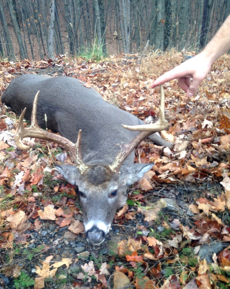 Md NRP seized illegally harvest 9 point buck | THE ...
