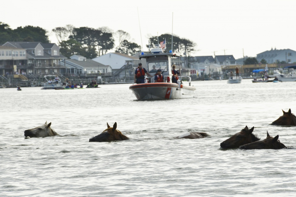 Ponies swim under watchful eye of Coast Guard at Chincoteague Island Va. Photo by Petty Officer 2nd Class Nate Littlejohn